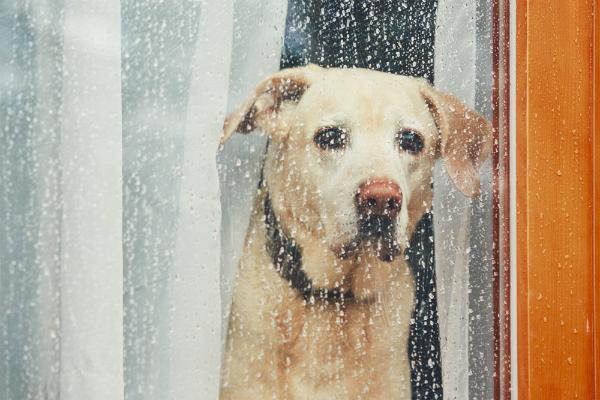 Hunde brauchen Kontakt zu ihren Artgenossen