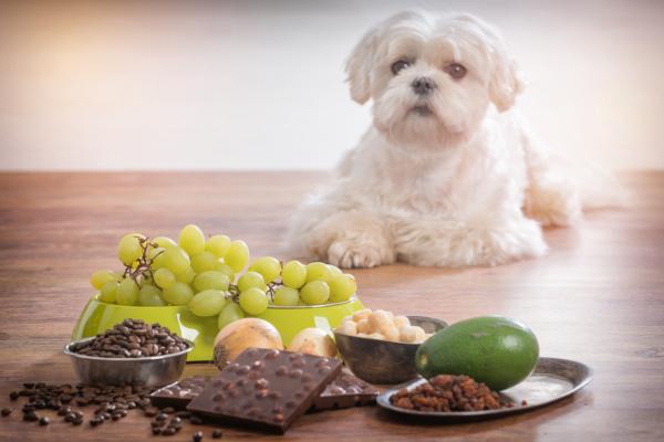 Giftige Lebensmittel fuer Hunde