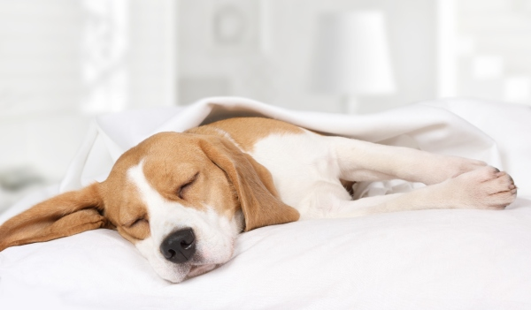 Hunde breiten sich im Schlaf gerne aus