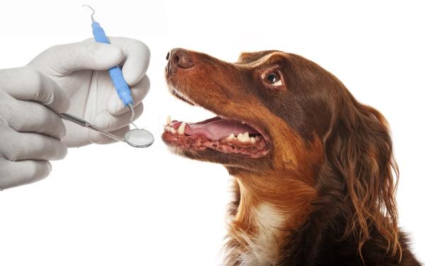 zahnhygiene-hund
