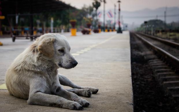 Hunde brauchen ggf. ebenfalls ein Ticket