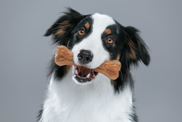 Hund mit leckerem Knochen