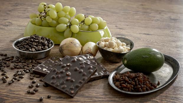 Schokolade neben anderen Lebensmitteln, die für Hunde giftig sind