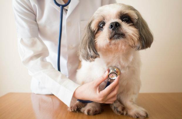 Ein Besuch beim Tierarzt ist unabdingbar