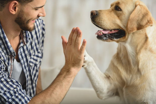 Nur wenn Ihr Hund sich fit fühlt, kann er ein gesundes Leben führen