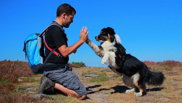 Hund und Mensch im Einklang