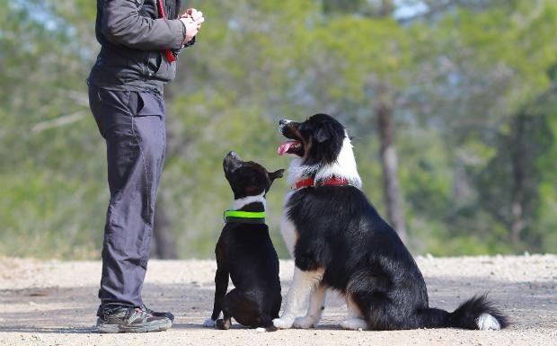 Hunde beim Training