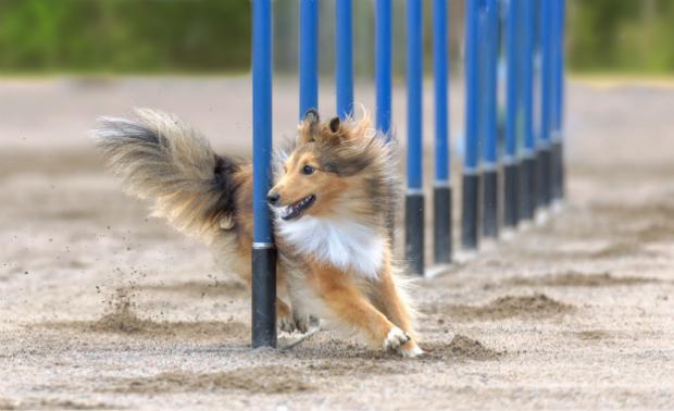 Agility Training für den Hund