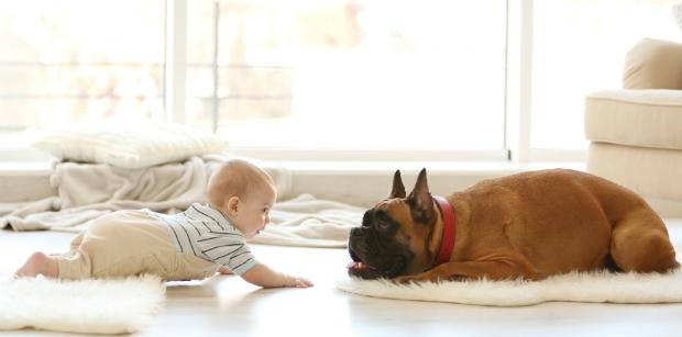 Der Hund muss sich an den Nachwuchs gewöhnen