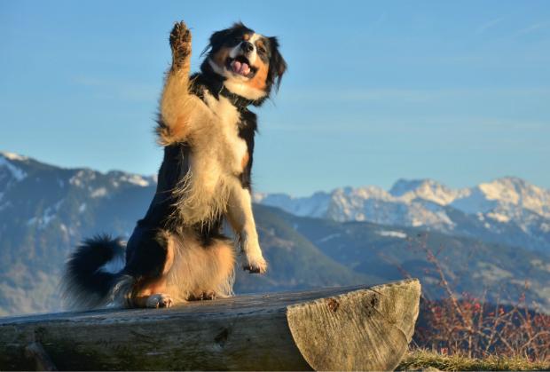Nur gesunde Hunde sollten auf langen Wanderungen dabei sein