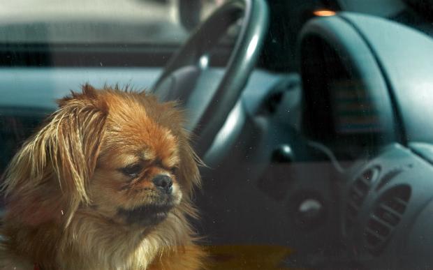 Temperaturen in stehenden Fahrzeugen werden ohne Klimatisierung schnell tödlich für Tier und Mensch!