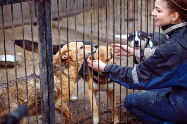 Im Zweifelsfall Tierheime in der Umgebung anrufen oder aufsuchen