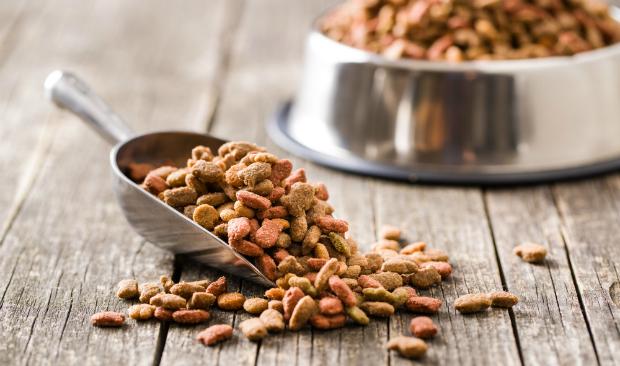 Geflügelfelisch sollte zubereitet werden, Salmonellengefahr! Im idealfall als getrockneten Kausnack oder Leckerli füttern