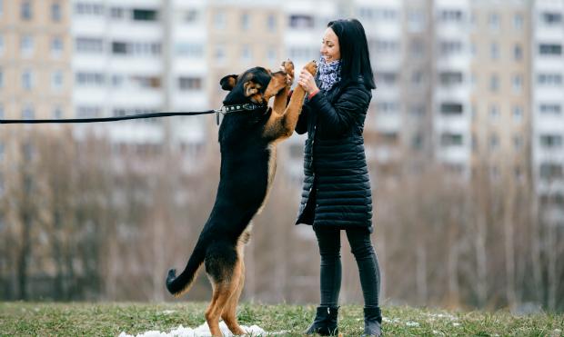 Tanzen mit dem Hund? Warum nicht!