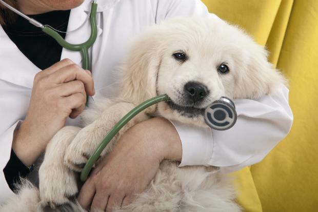 Ein Besuch beim Tierarzt ist ratsam