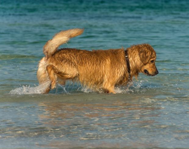 Ältere Hunde sollten das Wasser lieber genießen, anstatt es sportlich zu nutzen