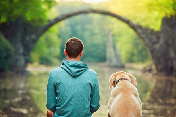 Nur weil Hunde fröhlich sind & spielen wollen, sind sie noch lange nicht das Alphatier!