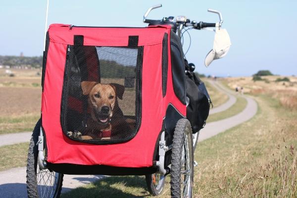 fahrradanhaenger-hund