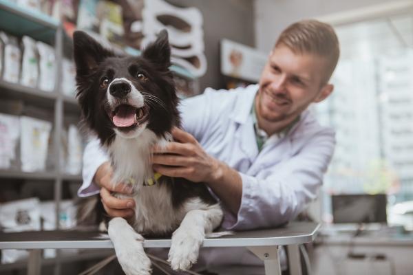 gesundheitscheck-hund