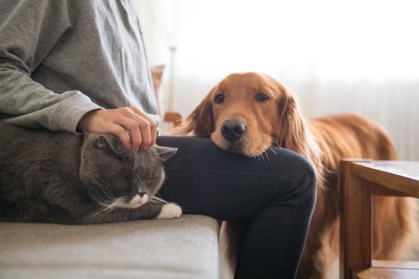 Hund an Katze gewoehnen
