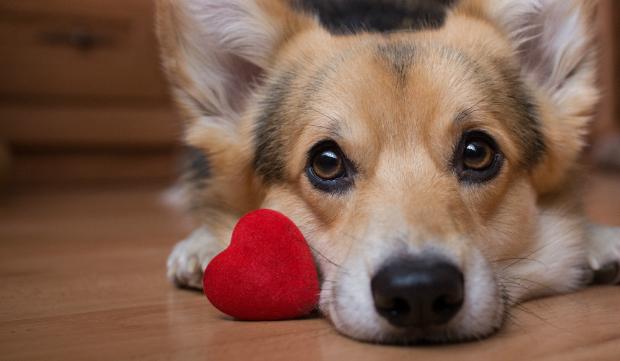 Der Hundeblick, wie wir ihn kennen