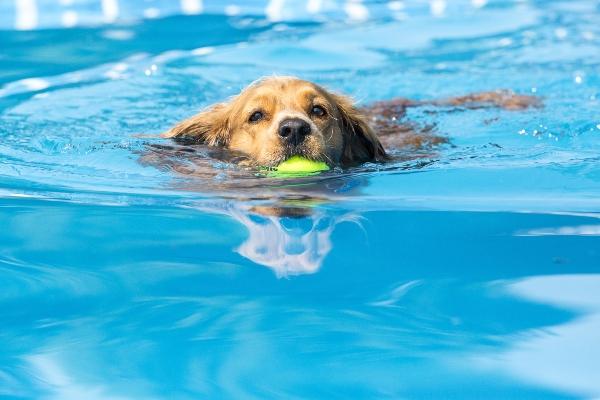 Schonende Fitness im Wasser fuer uebergewichtige Tiere