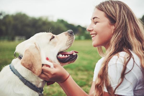 Fuer welche Hunde eignet sich Doerrfleisch