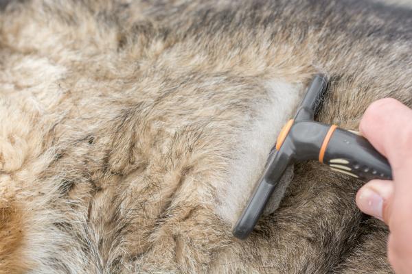 Fell eines Schaeferhundes wird gepflegt und durchgekaemmt