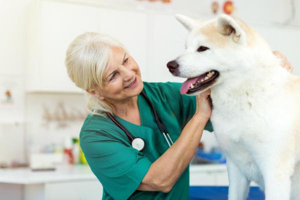 Hund beim Tierarzt untersuchen lassen