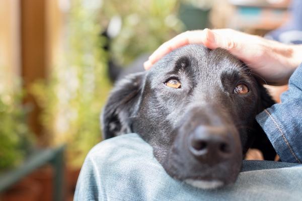 Hundeerziehung ist unabdingbar