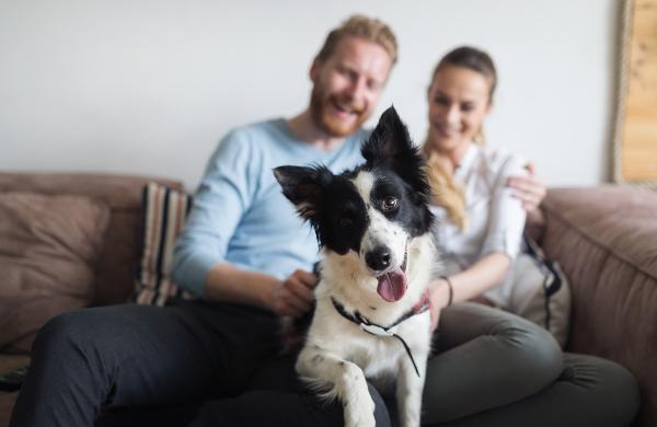 eigene-zuhause-artgerechte-hundehaltung