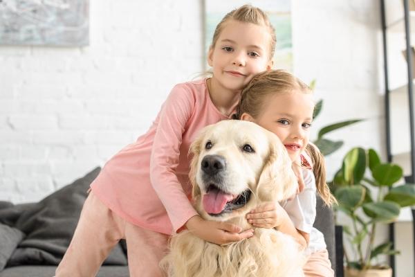 golden-retriever-familienhunde-fuer-anfaenger