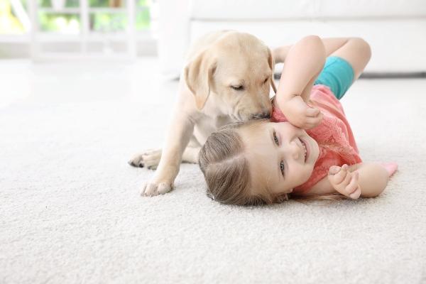 kinderfreundlicher-hund-fuer-anfaenger