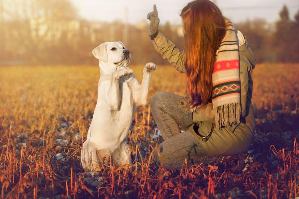 Frauchen bringt ihrem Hund das sehr beliebtes Kunststück Männchen bei
