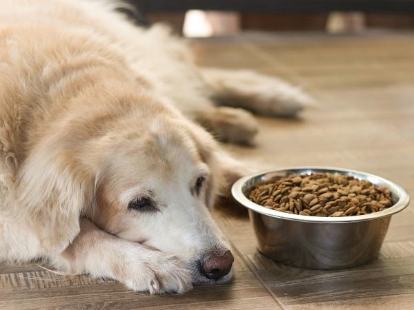 Vierbeiner hat bei wenig Bewegung nicht so viel Appetit maekeliger Hund
