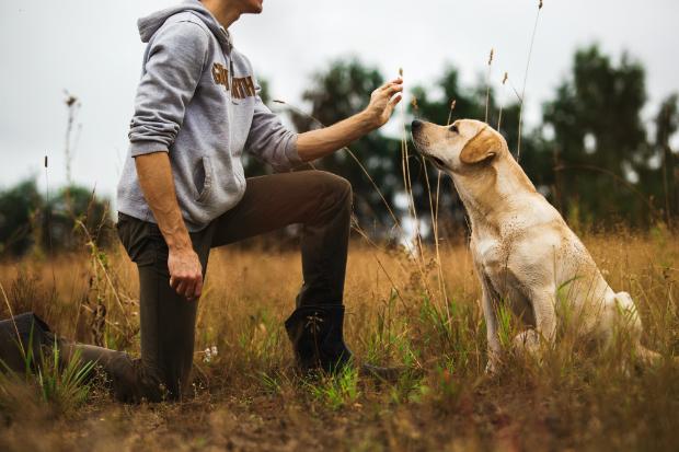 Hunde lieben Spiele mit Belohnung