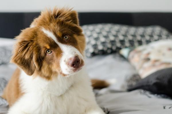 gluecklicher-hund-koerperhaltung