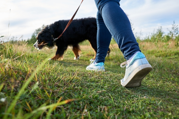 hund-wandern-leine