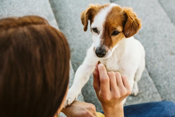 hundeerziehung-leckerlis-gluecklicher-hund