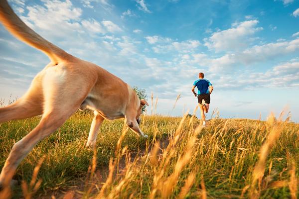 Ein Mann rennt über ein Feld, dicht dahinter folgt ihm sein Hund Welcher Hundesport ist der richtige für meinen Vierbeiner?