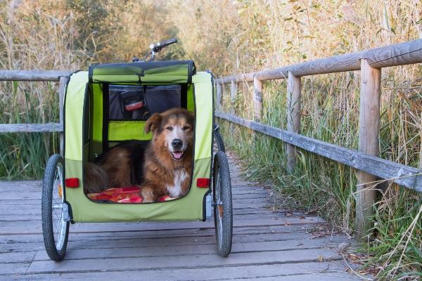 hund-liegt-gemuetlich-im-fahrradanhaenger