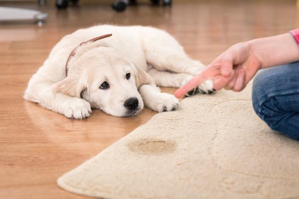 Beschwichtigungssignale von Hunden haben-hunde-ein-schlechtes-gewissen