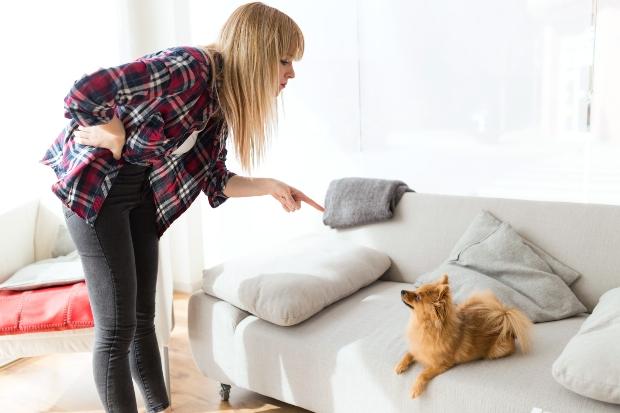 Frauchen guckt böse auf den Hund auf der Couch