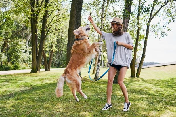 Frau belohnt Hund beim Training