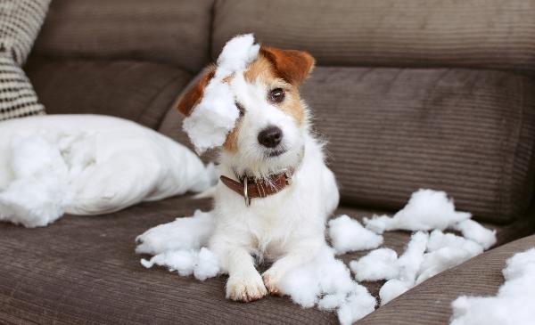 hund-hat-chaos-hinterlassen-haben-hunde-ein-schlechtes-gewissen