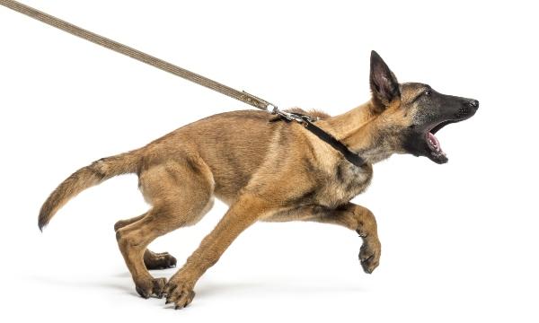 hund-leine-distanzvergroesserung-leinenaggression-beim-hund