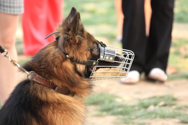 hund-maulkorb-leinenaggression-beim-hund