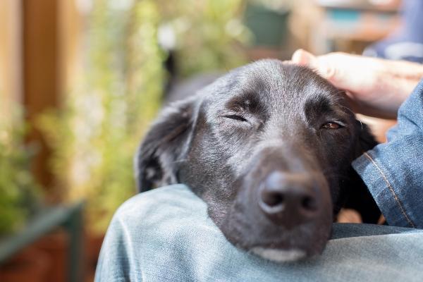hund-streicheln-haben-hunde-ein-schlechtes-gewissen