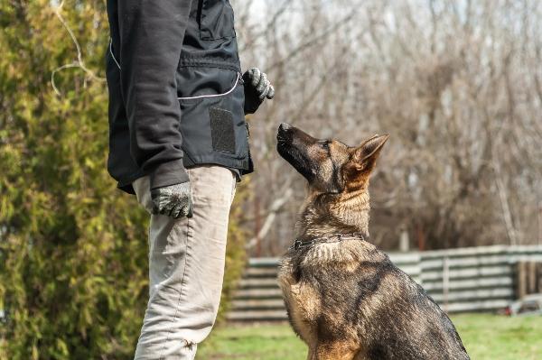 leinenaggression-hundetrainer