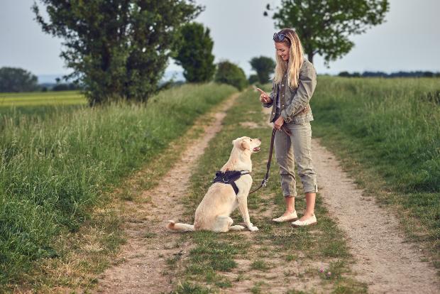 """Das Frauchen streckt den Zeigefinger raus - der Hund reagiert korrekt auf das Hundekommando """"Sitz"""""""